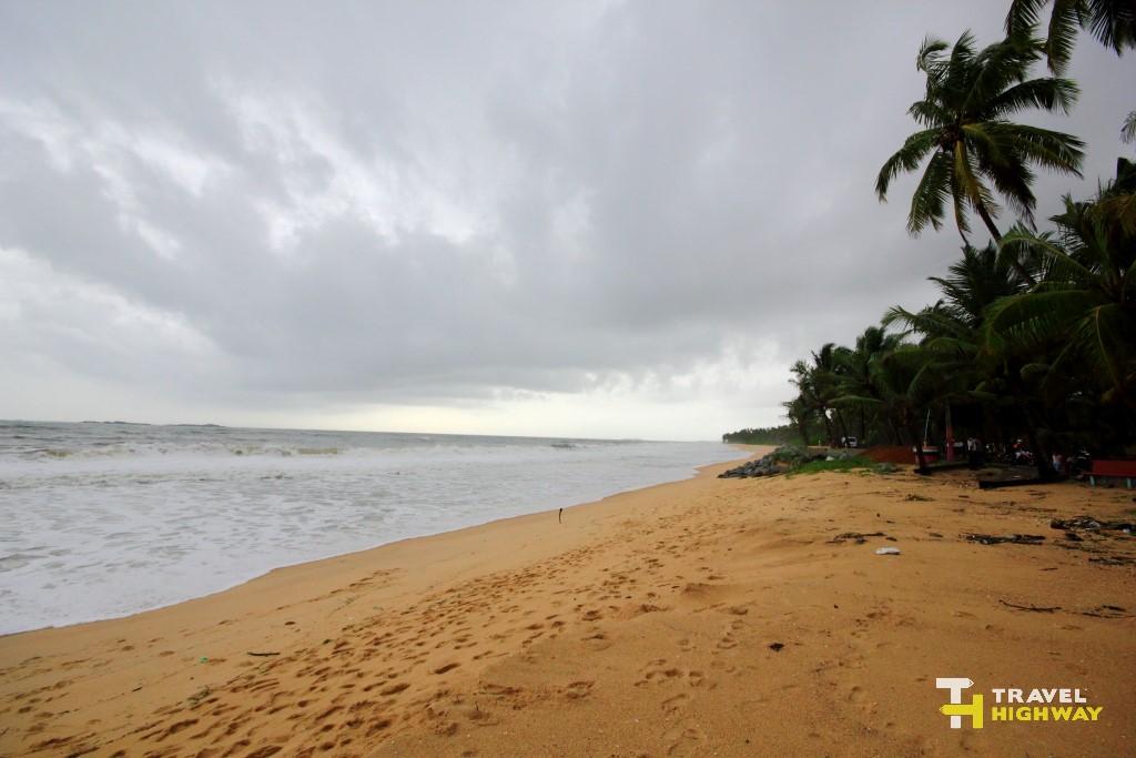 Mattu Beach Palm Trees