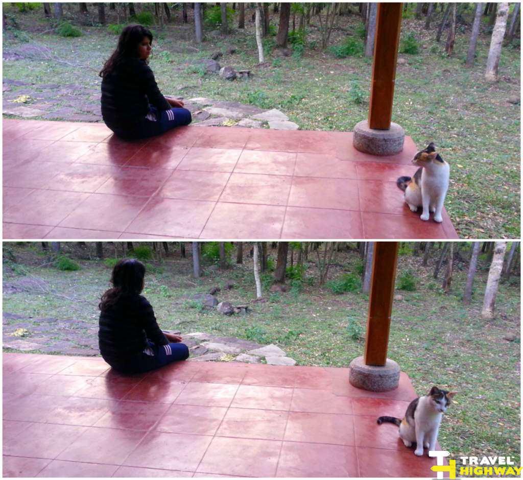 Cat at Masinagudi