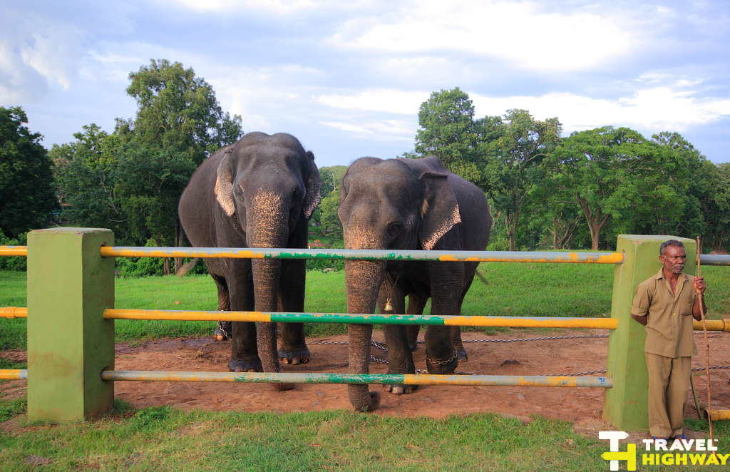 Hungry elephants at the camp