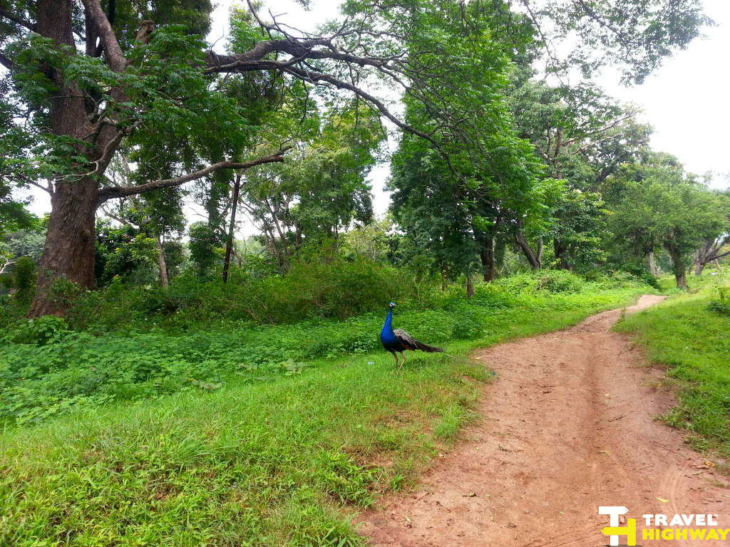Drive through Madhumalai Forest Sanctuary