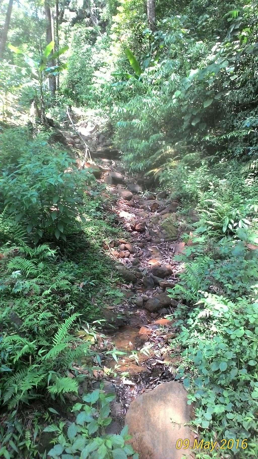 Forest Trails leading to Tadiyandamol Peak | Tadiyandamol Trek