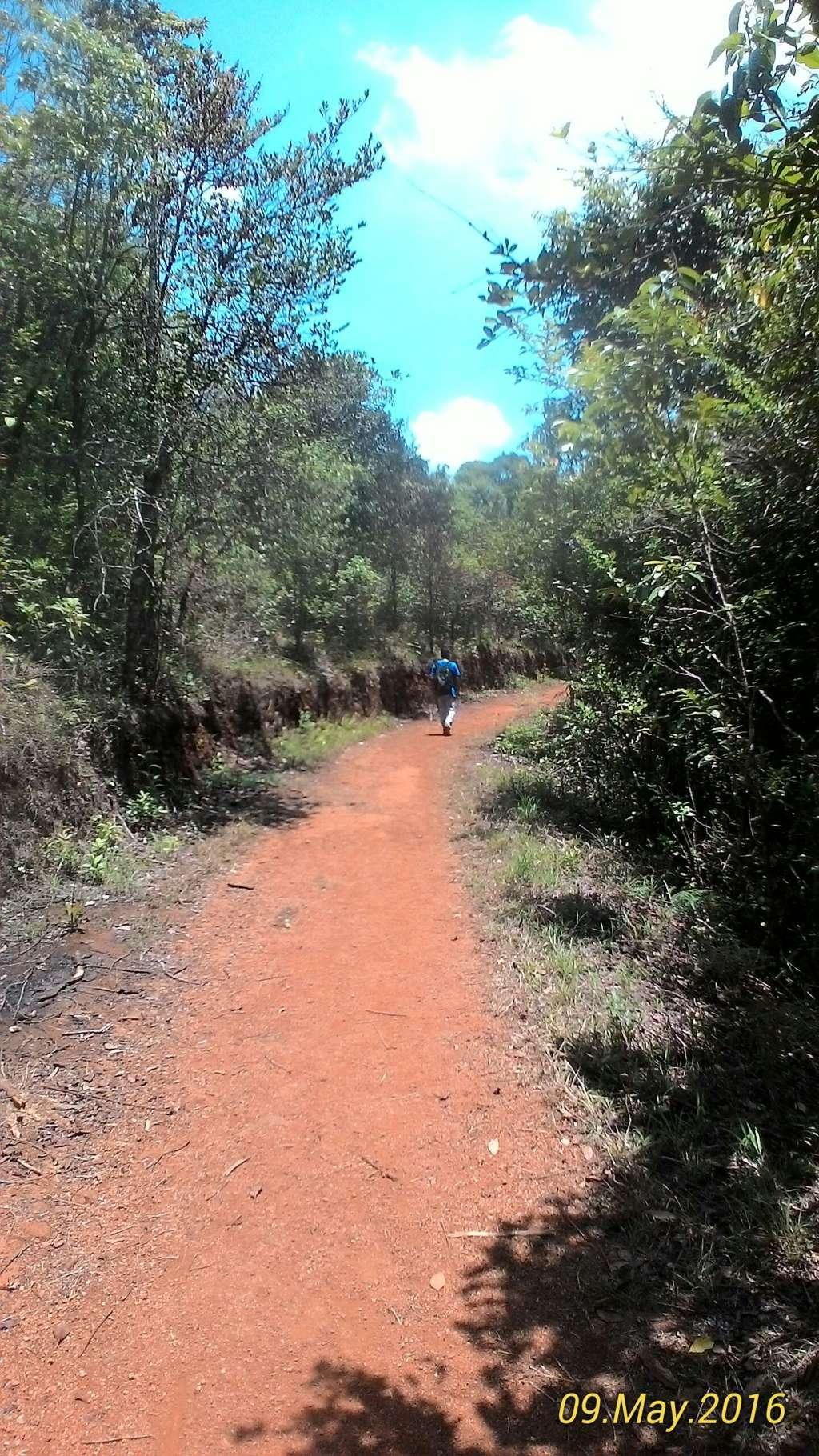 Path that leads to Tadiandamol Peak | Tadiandamol Trek Experience