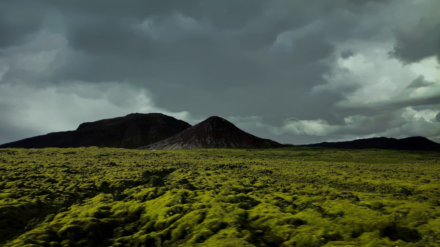 Green and brown mosses Iceland